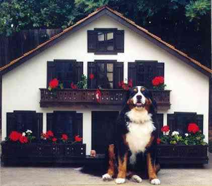 2032192661 e75c1d65e1 As mais incríveis casas de cachorro