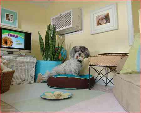 2033007162 8b975b10de As mais incríveis casas de cachorro