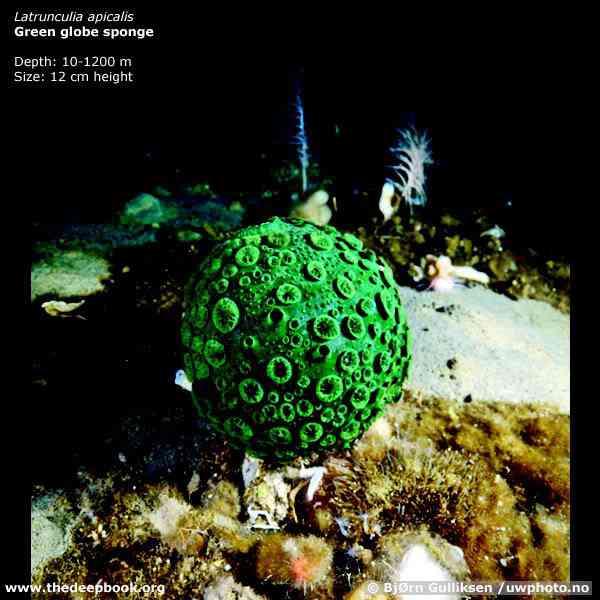 UW 72big Animais bizarros das altas profundidades II