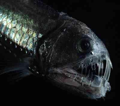 deepsea1 Animais bizarros das altas profundidades II
