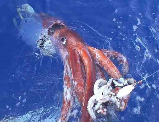 filhotinho Animais bizarros das altas profundidades II