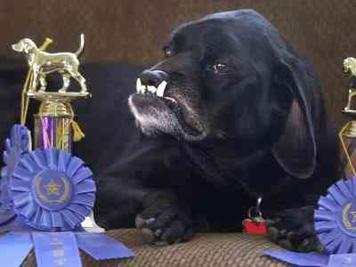 Ugly Dog Contest 31 Cães do capeta