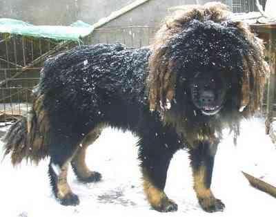 ueba funny18 Cães do capeta
