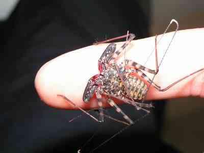whipscorpion Stefanphotobucket 10 bichos que eu não colocaria na mão    parte II