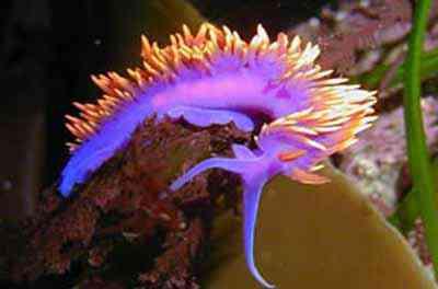 2498801211 5510a9d317 o Criaturas inacreditáveis do fundo do mar