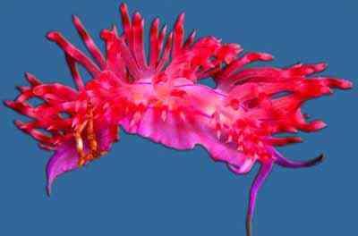 2498802029 5e18283a93 o Criaturas inacreditáveis do fundo do mar