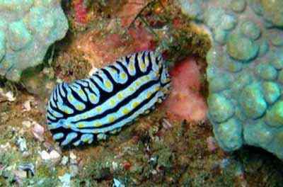 2498802721 8fdc8c43af o Criaturas inacreditáveis do fundo do mar