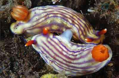 2498805329 2fee78132b o Criaturas inacreditáveis do fundo do mar