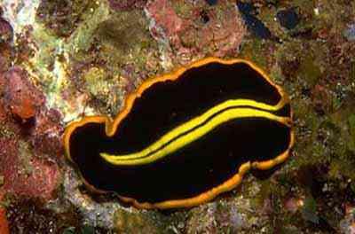 2499626606 3d237c4e27 o Criaturas inacreditáveis do fundo do mar