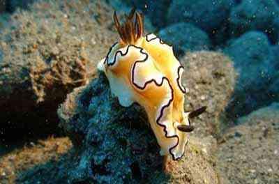 2499626718 5a12d78bcc o Criaturas inacreditáveis do fundo do mar