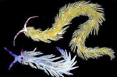 2499627708 c6513d207a o Criaturas inacreditáveis do fundo do mar
