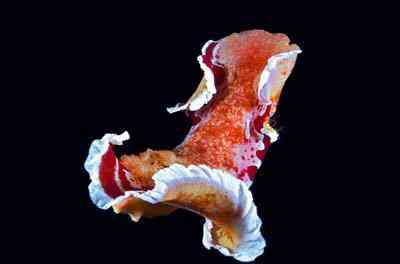 2499632676 feb0a88709 o Criaturas inacreditáveis do fundo do mar