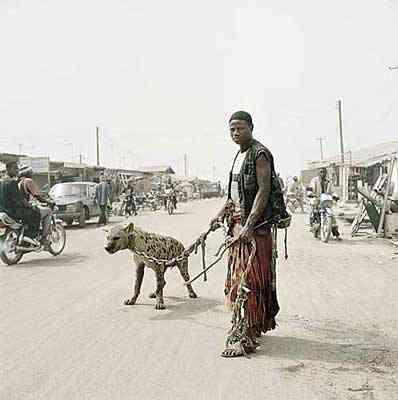 hyena06 Hienas   Animais perigosos