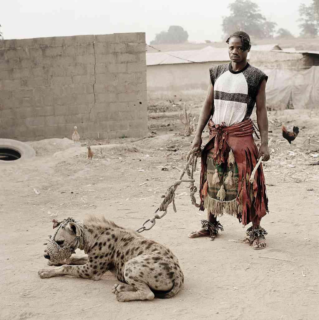 nigerianpet20hyena Hienas   Animais perigosos