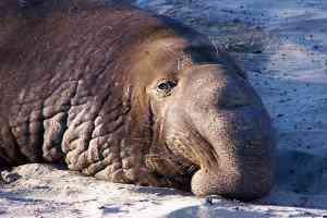 735365 300x200 Os animais mais bizarros do mundo Parte 2