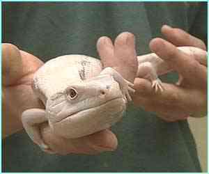 1764125 albino4 Albinismo: O branco que a natureza merece