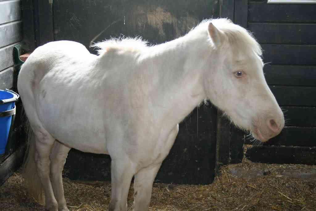 IMG 3863 Albinismo: O branco que a natureza merece