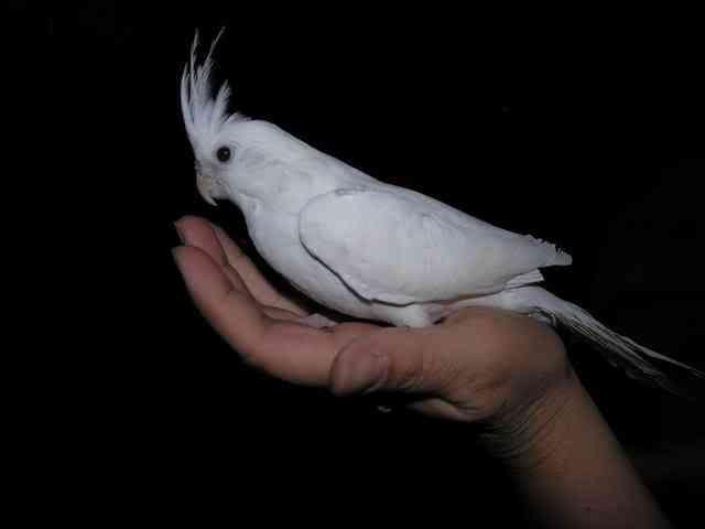 albino4 Albinismo: O branco que a natureza merece