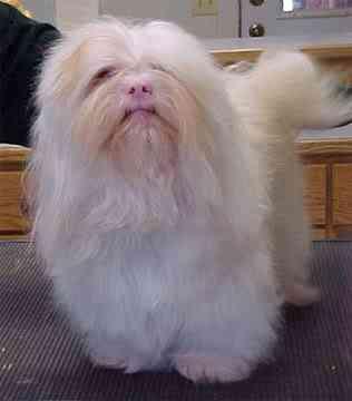 albinoLhasa 1 Albinismo: O branco que a natureza merece