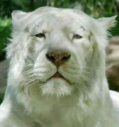 albino animals Albinismo: O branco que a natureza merece