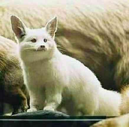 albino animals2 Albinismo: O branco que a natureza merece