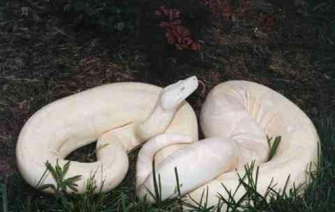 albino animals3 Albinismo: O branco que a natureza merece