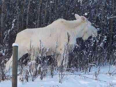 albino animals 06 Albinismo: O branco que a natureza merece