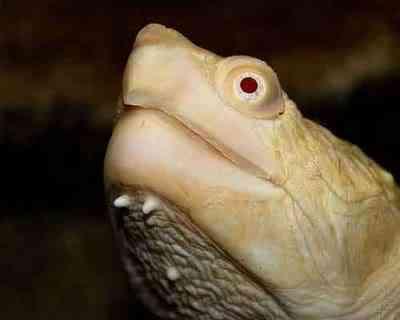 albino animals 09 Albinismo: O branco que a natureza merece