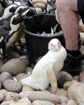 albino animals 14 Albinismo: O branco que a natureza merece