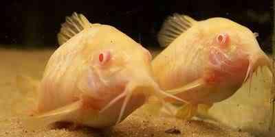 albino animals 22 Albinismo: O branco que a natureza merece