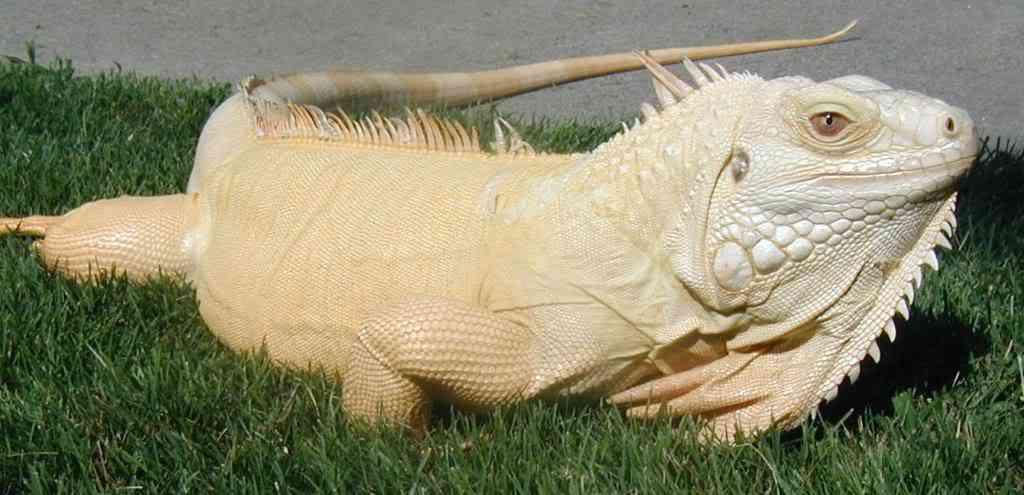 albinofemale Albinismo: O branco que a natureza merece