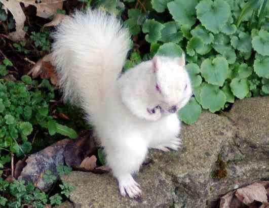 ap squirrel 080411 ssh Albinismo: O branco que a natureza merece