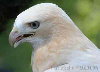 img 7849 Albinismo: O branco que a natureza merece