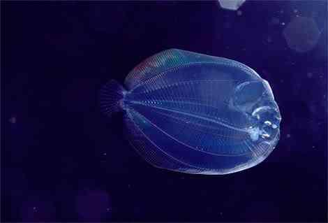 translucent larval flounder newbert Criaturas inacreditáveis do fundo do mar   parte 2