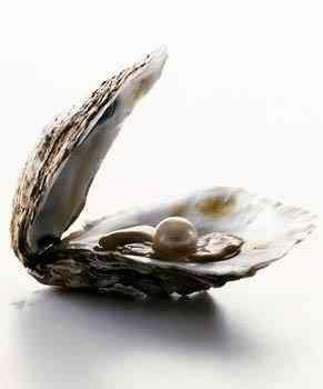 ostra Fatos incríveis sobre as pérolas