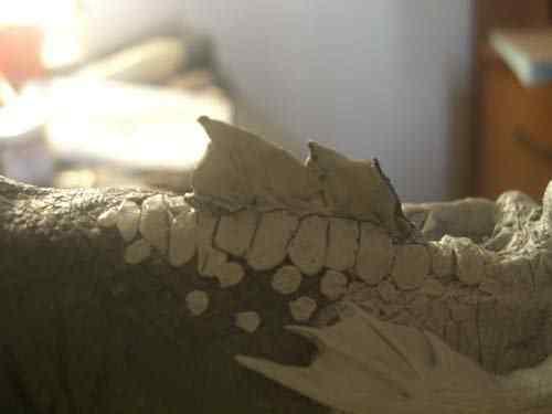 CIMG0604 Aqua Rex parte 3   O acabamento