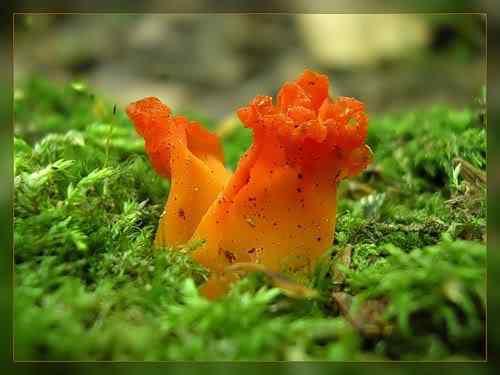 0 1d42e 1700c9b9 L Os mais incríveis fungos e líquens da natureza