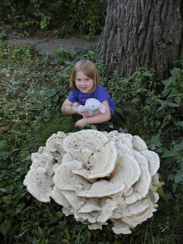 754831434 mushroom t640 Os mais incríveis fungos e líquens da natureza