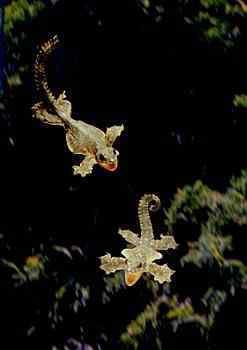 AGPix BBNaHiUn21 0449 Lg Lagartixas, animais incríveis