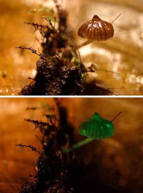 beforeafterva4 Os mais incríveis fungos e líquens da natureza