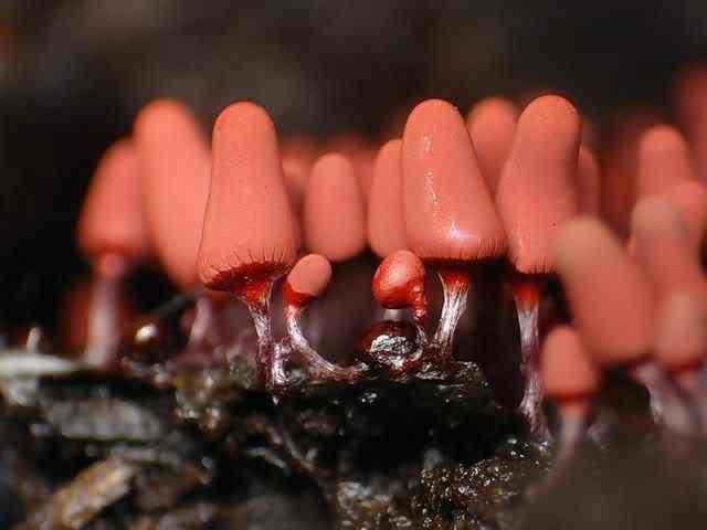 slime mold 01 Os mais incríveis fungos e líquens da natureza