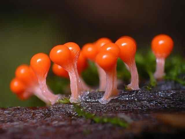 slime mold 02 Os mais incríveis fungos e líquens da natureza