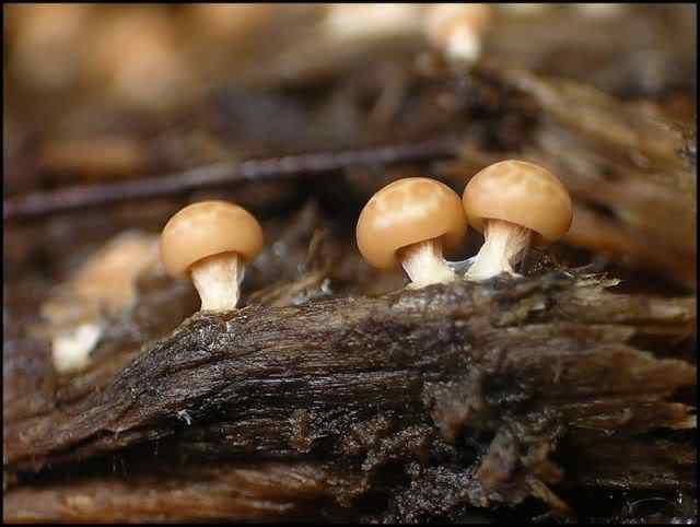 slime mold 03 Os mais incríveis fungos e líquens da natureza