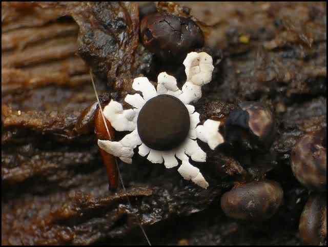 slime mold 05 Os mais incríveis fungos e líquens da natureza