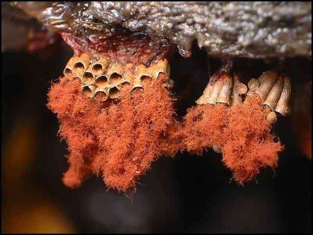 slime mold 07 Os mais incríveis fungos e líquens da natureza