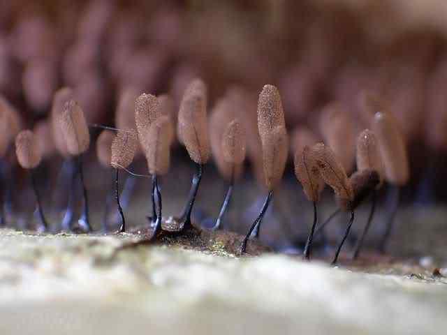 slime mold 18 Os mais incríveis fungos e líquens da natureza