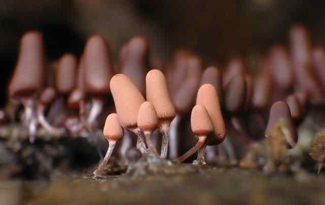 slime mold 21 Os mais incríveis fungos e líquens da natureza