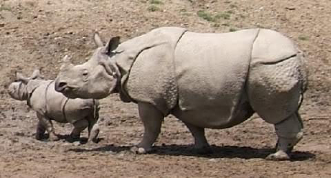 rinoceronte3 Fotos de fantasmas