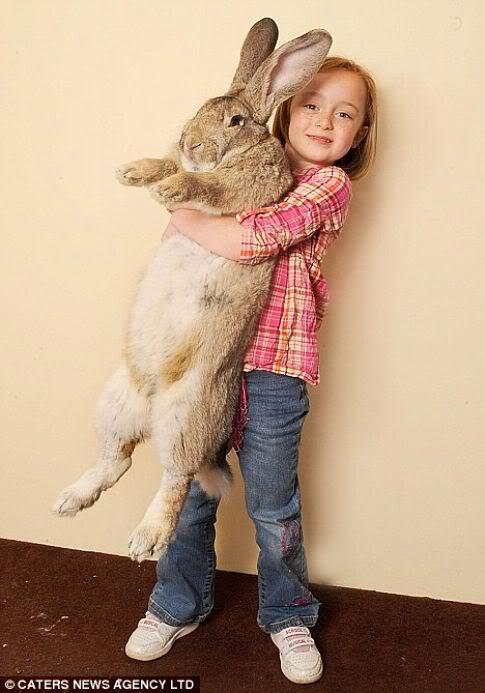 the beaster bunny 1 Mundo gigante   Um apanhado de coisas gigantes da web