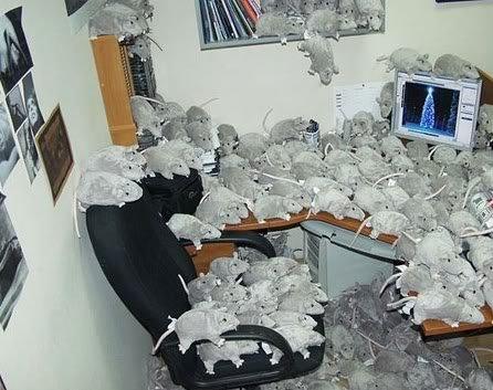 office pranks05 Pegadinhas de escritório